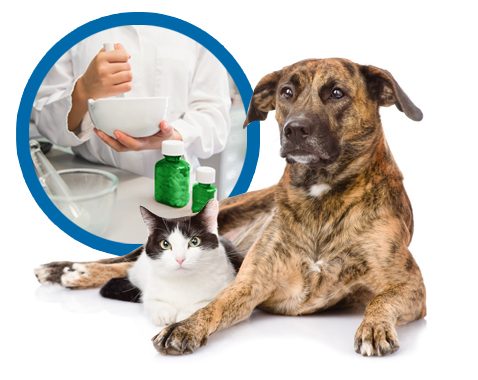Shrivers-Pharmacy-Patient-Animal-Compounding-Services-Medical-Medication